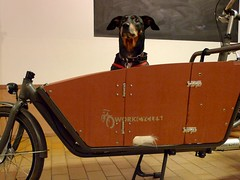 WorkCycles-Kr8-Doggie-Door 6 (@WorkCycles) Tags: door dog amsterdam box hond customer custom doggie deur bak honden bakfiets transportfiets workcycles kr8