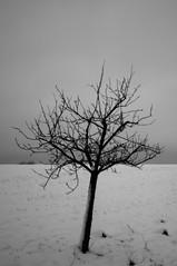 lonely little tree (Eisfried) Tags: schnee snow tree deutschland md minolta sony 28 baum saarland nex rokkor walpershofen nex6