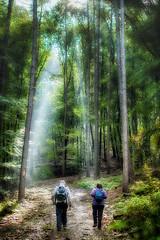 Some light (Michael A64) Tags: trees forest 18 35 wald bume baum velbert wandern dx neviges d7100