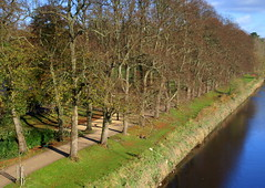Row of Preston trees (Tony Worrall) Tags: park county uk trees england nature stream tour open place northwest country north visit location row lancashire area preston northern riverbank update attraction lancs avenham avenhampark riverribble welovethenorth 2015tonyworrall