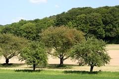 Gundelfingen landscape III (tillwe) Tags: tree green landscape spring blackforest tillwe rebberg gundelfingen 201605
