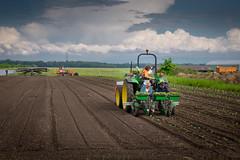 Les planteurs de patates douces (Clydomatic) Tags: alsace plantation agriculture champ tracteur agriculteurs planteurs