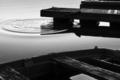 F00140 Steinberger See (haraldportele) Tags: sun white nature bayern bavaria blackwhite outdoor natur sw schwarzweiss sonne weiss schwarz oberpfalz weis upperpalatinate