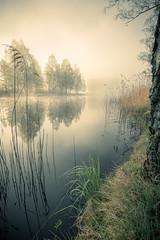 Misty morning (Simon KG) Tags: morning mist dimma morgon dew dagg lake sj water vatten