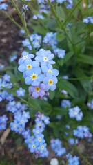 Blmchen (snooooooopppppyyyyy) Tags: flower green matt natur pflanze lila gelb grn blume blte frhling sdpark dus frhlingsblume
