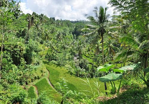 bali nord - indonesie 84