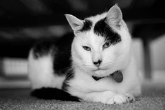 Under the bed (fishyfish_arcade) Tags: blackandwhite bw monochrome cat mono blackwhite nikon dof bokeh depth 35mmf18 d3200 nikonnikkor35mmf18gafsdx