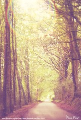 (flicspics) Tags: road wood trees sun sunlight tree nature leaves glitter forest woodland outside outdoors rainbow pretty glow bokeh path walk digitalart dream surreal trail fantasy dreamy sunrays wonderland fairyland enchanted edit fantasyworld