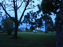 Evening in the woods (Rosane Delattre) Tags: trees grass dark evening woods grama bosque anoitecer escuro rvores