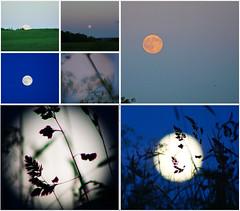 Strawberry Moon (nancy II) Tags: summer moon june rising scotland strawberry midsummer dusk full solstice 2016