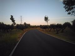 Dehesa Doa Mara (Dos Hermanas,Sevilla) (Aurora Mayorga) Tags: trees landscape outdoors highway rboles carretera paisaje vegetation forestpark vegetacin parqueforestal airelibre