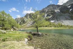 Albero (Mauro_Amoroso) Tags: blue lake nature nikon adventures nationalgeographic waterscapes moutnain natgeo nital arpy nikonlandscape lagodarpy nikonitalia volgopiemonte mauroamorosoadventures