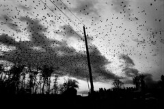 Pellegrin_Paolo_PAR232365 (gustavo.flores.romero) Tags: cloud black bird monochrome face cemetery animal landscape grey europe day exterior empty flight scenic kosovo nuage paysage telegraphpole raven herd processed oiseau humanbeing visage vide southerneurope pristina corbeau humain troupeau nofaces southeasteurope extrieur couleurgris fearatmospheresensation cimetire voldanslesairs peuratmosphreambiancesensation europedusudest poteaulectrique