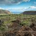 Isabela Island Landscape, Galapagos, Ecuador