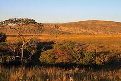 Happy hour (Rafael C. C. de Souza) Tags: sunset wild brazil sky sun tree nature landscape adventure savannah serra entardecer cip savana
