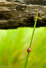 ladybird (islahuddin ashraf) Tags: monumnets nikond40xpics olddelhi strret tifffiles