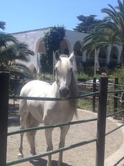 Jessica_Emmerich_Horsemanship_Andalusien_08 (jessica_emmerich) Tags: hotel natural jessica hurricane second andalusien spanien tarifa kurs horsemanship emmerich hippica