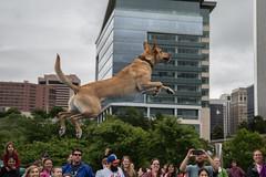 GY8A8479.jpg (BP3811) Tags: dog water pool virginia jump ultimate air richmond toss leap fetch throw riverrock dominion retrieve
