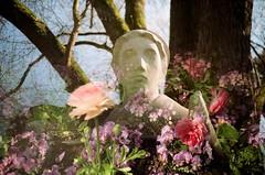 Freising (iampaulrus) Tags: doubleexposure lca lomography lomo freising germany statue sculpture tree flowers flower paulfargher paulfargherphotography 35mm film multipleexposure splitzer munich deutschland photoexpresshull ロモグラフィー analogue analog