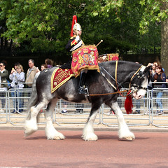 Follow her lead! Household Cavalry's first female bandmaster ...