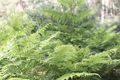 Woods (Macarena Lpez) Tags: woods green segovia espinar castillayleon nature outdoors