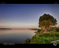 Calm (tomraven) Tags: light sunset newzealand tree bay dusk inlet j5 bayofplenty themount nikon1 tomraven aravenimage q22016