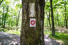 Trail marker (kzoop) Tags: park trees newyork tree nature outdoor hiking hike bearmountain manual 12mm bearmountainstatepark samyang majorwelchtrail majorwelch