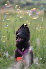 Happy Sunday <3 (Claudia Brockmann) Tags: dog nature natur hund hundewelpen hundewelpe