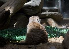 National Zoo  (1332) (smata2) Tags: zoo nationscapital smithsoniannationalzoo itsazoooutthere zoosofnorthamerica