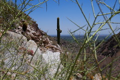 Cactus Piestewa Peak Park AZ (artistwhite) Tags: arizona cactus mountain phoenix hiking trail valley overlooking