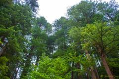 DSC_1943 (Amishrit) Tags: mountain snow rock forest garden landscape temple shimla flora nikon manali kulu chandigarh kufri rohtang hadimba d7100 vasista