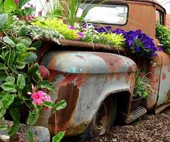 My Truck Groweth Over (e r j k . a m e r j k a) Tags: county flowers rural truck garden whimsy pennsylvania pickup beaver chevy roadside findlay allegheny us30 lincolnhighway erkprunczyk