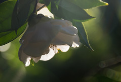 Good morning! (Jutta Sund) Tags: flower sunlight morning bokeh macro