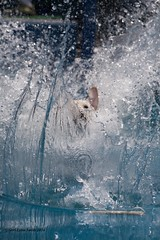 Thru a Wall of Water-Explored July 4, 2016 (gerilynns) Tags: dogs water toys outdoors jumping maine splash kittery dockdogs