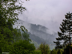 Schwarzwald # 100_1140 # KonicaMinolta Dimage G600 - 2005 (irisisopen f/8light) Tags: color digital minolta konica farbe dimage g600 irisisopen