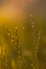 Last Rays (gabi_halla) Tags: light sunset summer sunlight plant macro green home nature colors beauty field grass leaves last garden lights fly leaf dof outdoor dream peaceful harmony rays macros daydream daydreaming macrophoto macrophotography