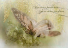 Ethereal Slide (lclower19) Tags: texture composite butterfly nikon soft doubleexposure text ethereal hmm 105mm hss d90 poetography macromondays