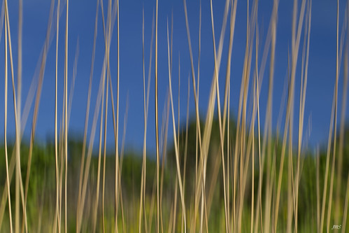 Tall Grass on the Prairie - Day 145 of 365