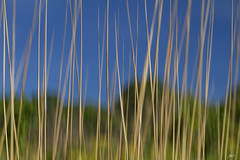 Tall Grass on the Prairie - Day 145 of 365 (jeanne.marie.) Tags: trees sky field grass spring prairie icm day145 intentionalcameramovement day145365 3652013 365the2013edition 25may13