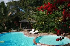 Invitation to relax... (Sokleine) Tags: flower pool garden indianocean jardin exotic leisure relaxation runion piscine iledelarunion reunionisland sterose ocanindien matiilona