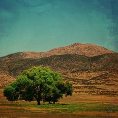 Lone Oak (M. Cockrell) Tags: california landscape grassland textures texture trees tree oak oaktree memory mcockrell