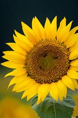 2013 #1 (kobaken++) Tags: sky mountain flower canon eos mt zoom bokeh 1d  yamagata   mark3  gassan markiii