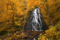 Crabtree Falls - Blue Ridge Parkway, North Carolina (Will Shieh) Tags: travel flowers autumn trees mountain tree fall nature water colors leaves yellow canon landscape golden waterfall leaf nc long exposure seasonal conservation crab northcarolina falls foliage explore will change environment tranquil blueridgeparkway crabtreefalls shieh lightvision