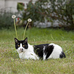 My Favorite Martian (eyepiphany) Tags: cat feline kitty aliencat martiancat catwithantennae myfavoritemartan martiankitty