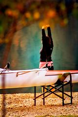 Fuerza y Dedicacin II - Strength and Dedication II (*atrium09) Tags: barcelona espaa naturaleza color tree nature water colors sport arbol agua pantano swamp deporte rowing hdr remo fuerza baells dedicacin atrium09 rubenseabra joanot clubremobarcelona rowingclubbarcelona