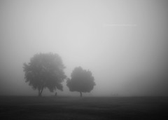 Foggy Field (snippets_from_suburbia) Tags: