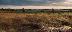 Strong winds - part 1 (Kees Waterlander) Tags: thenetherlands natuur drenthe natuurgebieden bargerveen zwartemeer