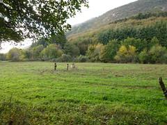 Caprino - San Martino (Platano) - Caprino (briiblog) Tags: friends sunset church walking afternoon sagra caprino sanmichele sanmartino gaon sengiorosso caiar