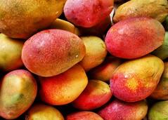 Anglų lietuvių žodynas. Žodis stone-fruit reiškia n bot. kaulavaisis lietuviškai.