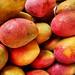 Mango - Mangue